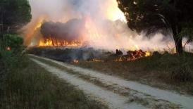 İskenderun ve Arsuz'da orman yangını